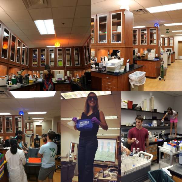 Collage of photos from the lab